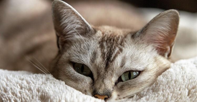 9 lucruri pe care femeile ar trebui sa le invete de la pisici