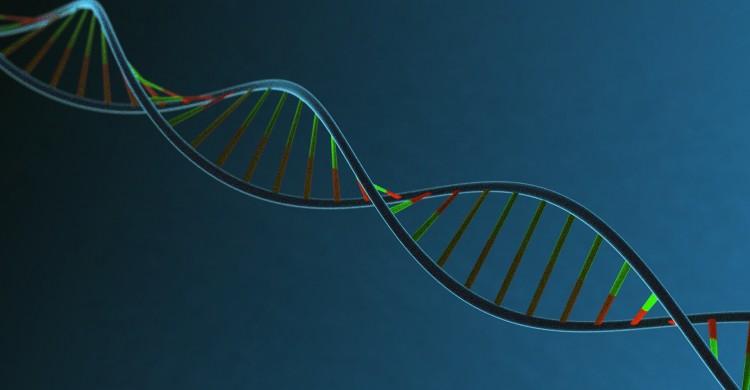 Memoria genetica
